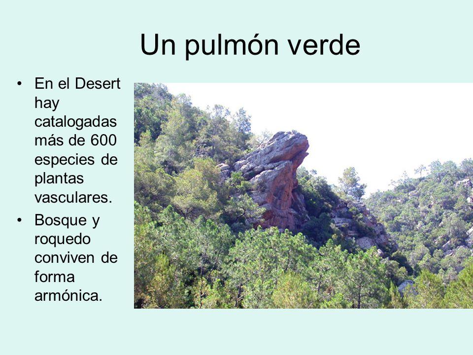 Un pulmón verdeEn el Desert hay catalogadas más de 600 especies de plantas vasculares.