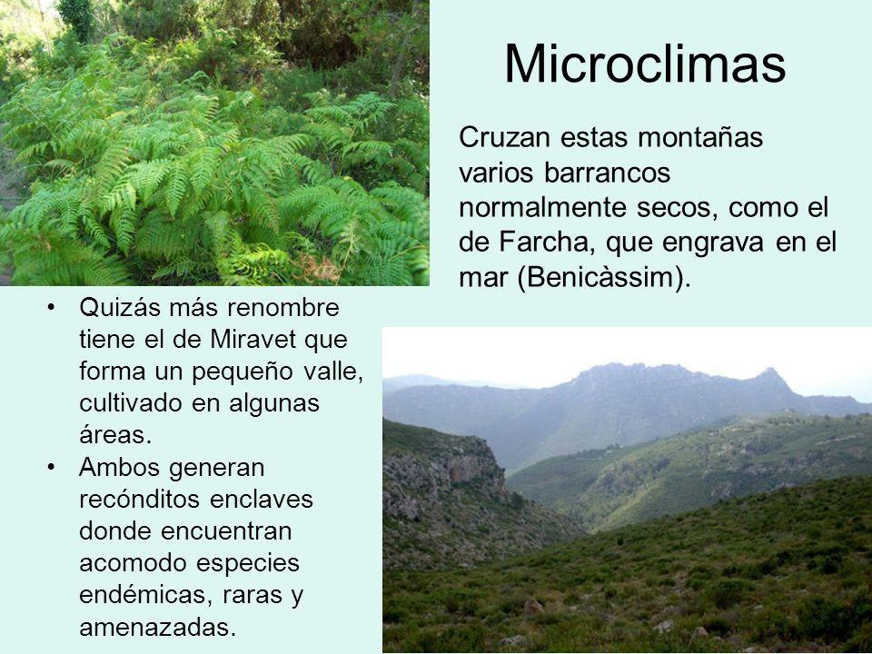 MicroclimasCruzan estas montañas varios barrancos normalmente secos, como el de Farcha, que engrava en el mar (Benicàssim).