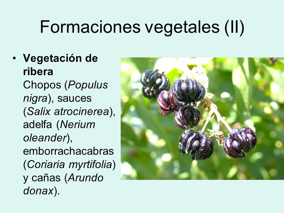 Formaciones vegetales (II)