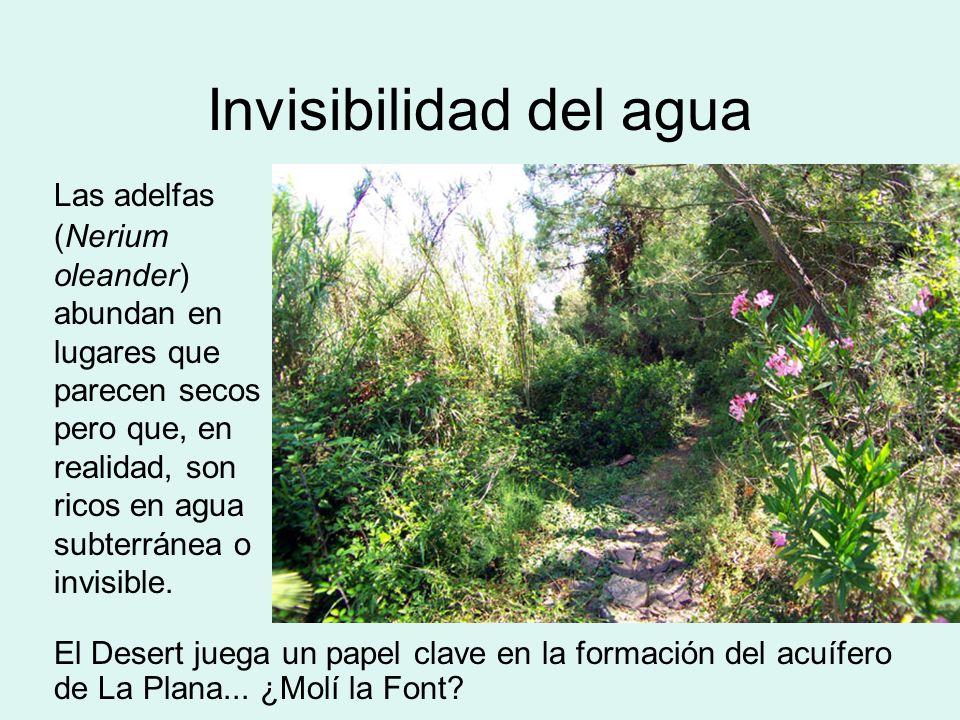 Invisibilidad del agua