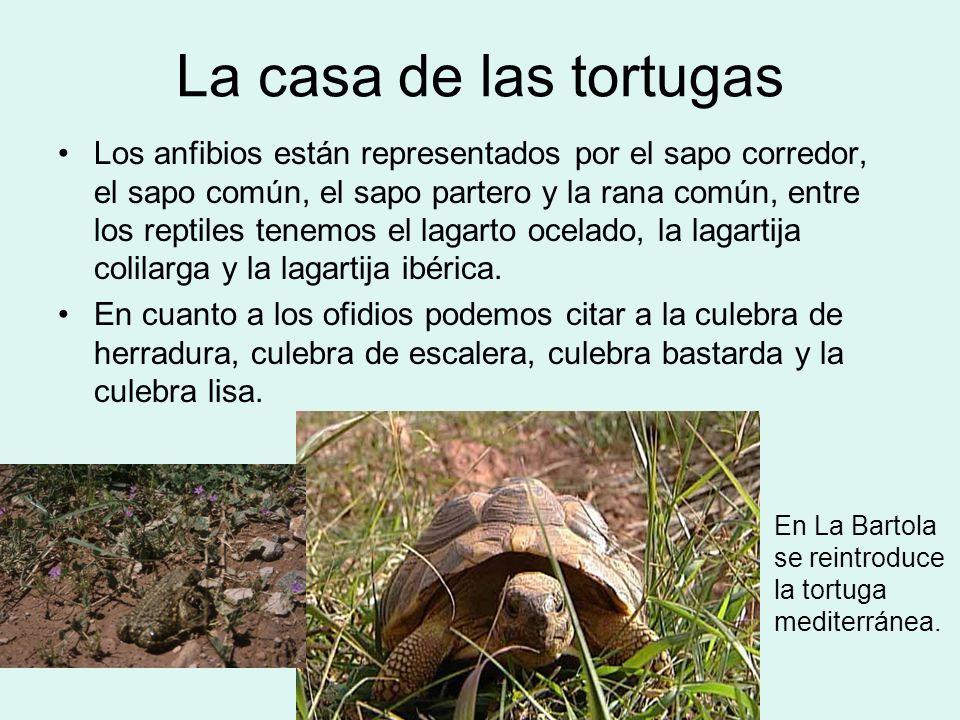 La casa de las tortugas