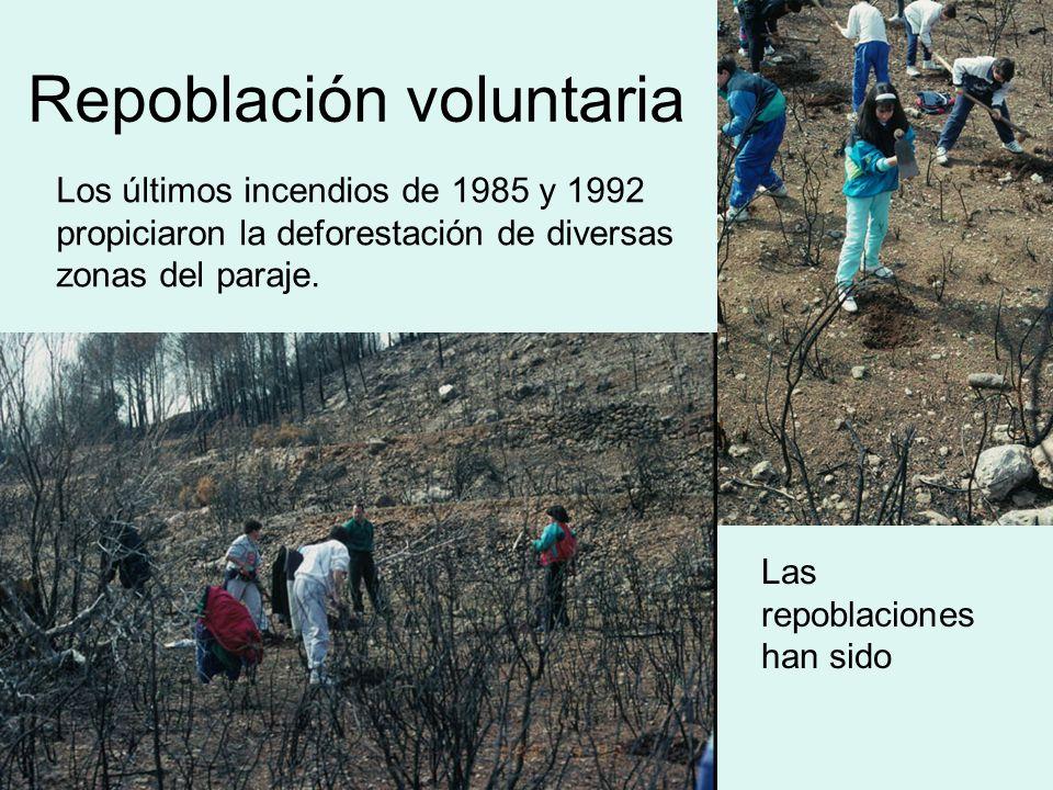 Repoblación voluntaria