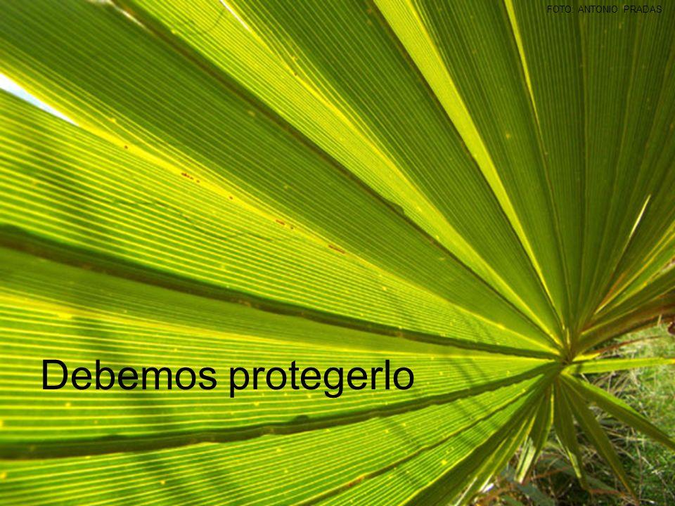 FOTO: ANTONIO PRADAS Debemos protegerlo