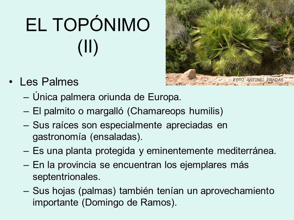 EL TOPÓNIMO (II) Les Palmes Única palmera oriunda de Europa.