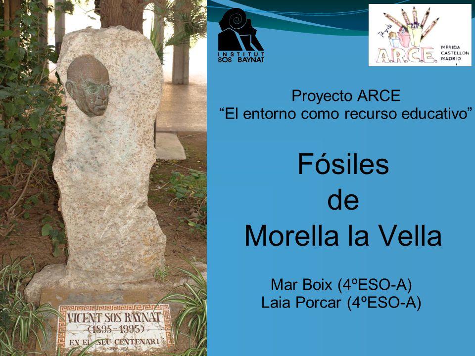 Fósiles de Morella la Vella
