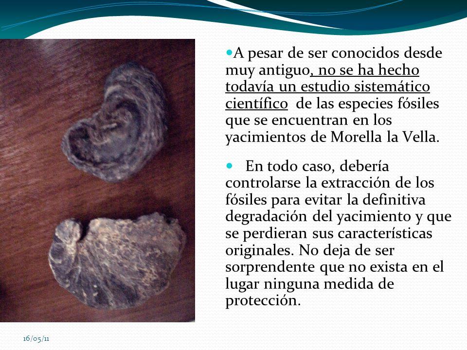 A pesar de ser conocidos desde muy antiguo, no se ha hecho todavía un estudio sistemático científico de las especies fósiles que se encuentran en los yacimientos de Morella la Vella.