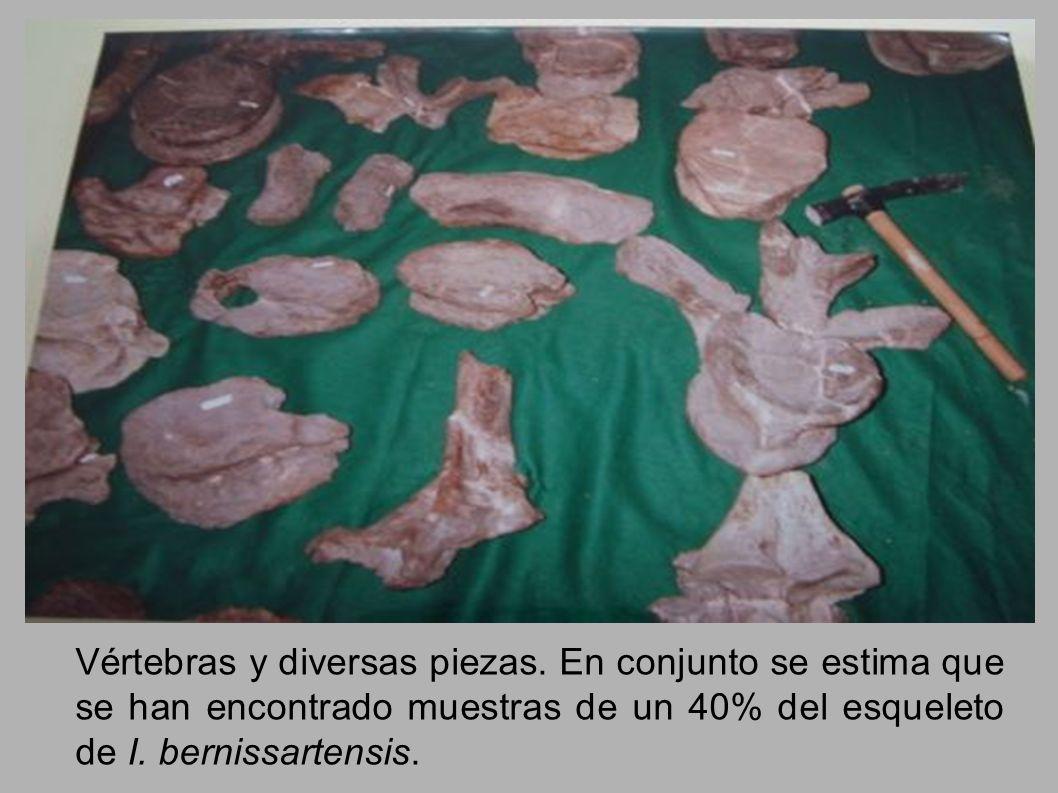 Vértebras y diversas piezas