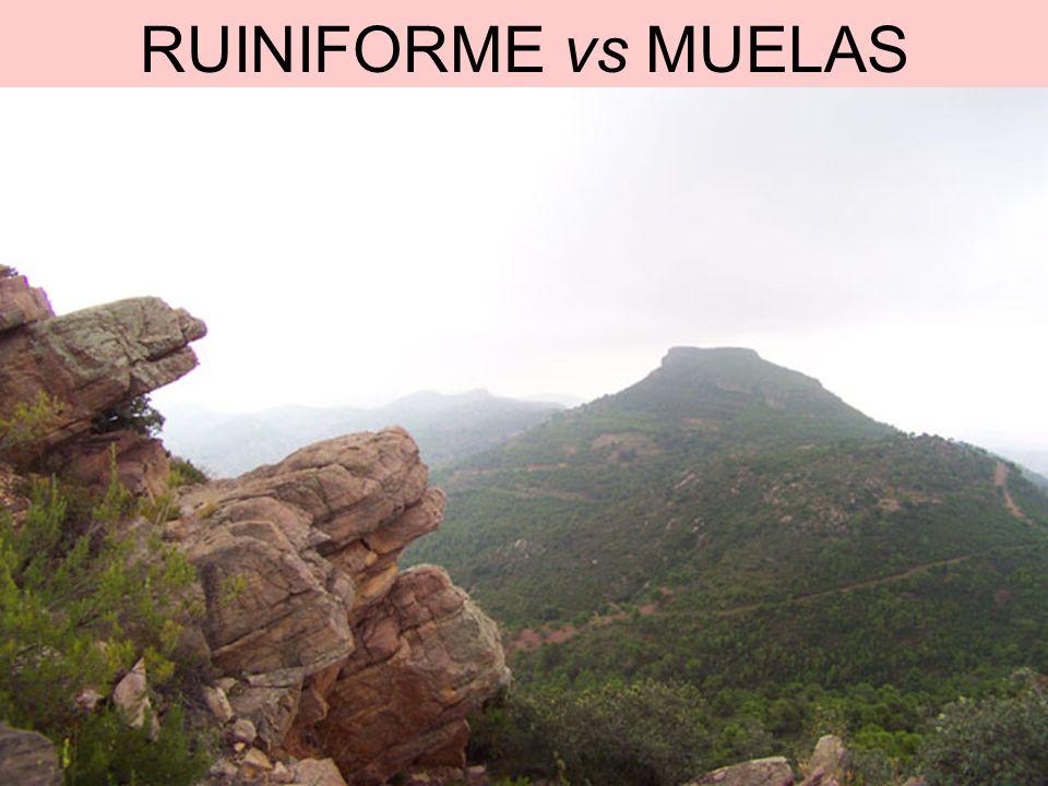 RUINIFORME vs MUELAS