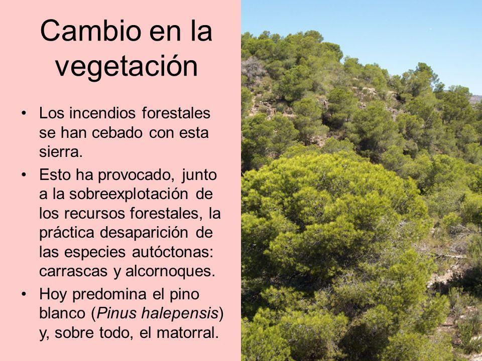 Cambio en la vegetación