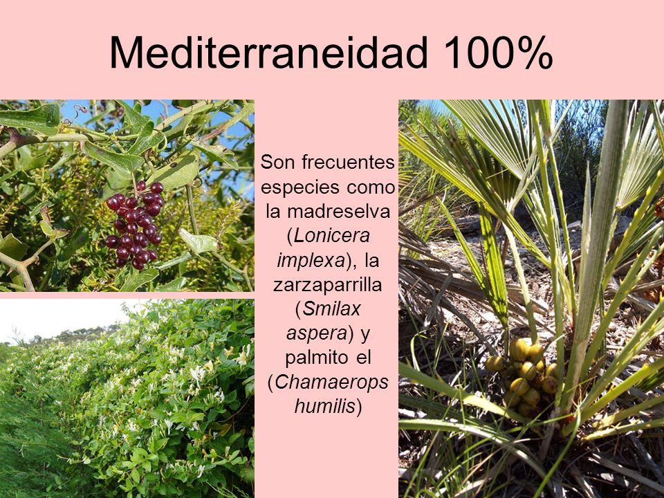 Mediterraneidad 100%
