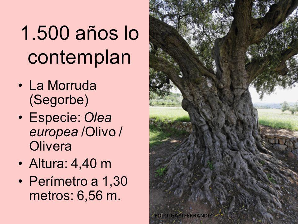 1.500 años lo contemplan La Morruda (Segorbe)