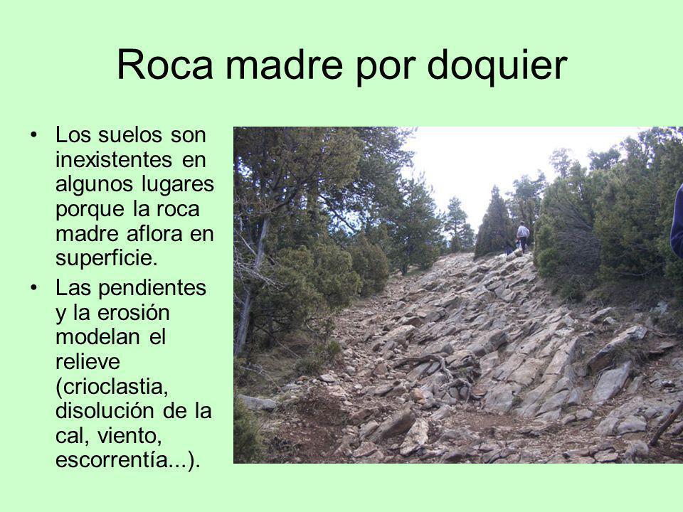 Roca madre por doquier Los suelos son inexistentes en algunos lugares porque la roca madre aflora en superficie.