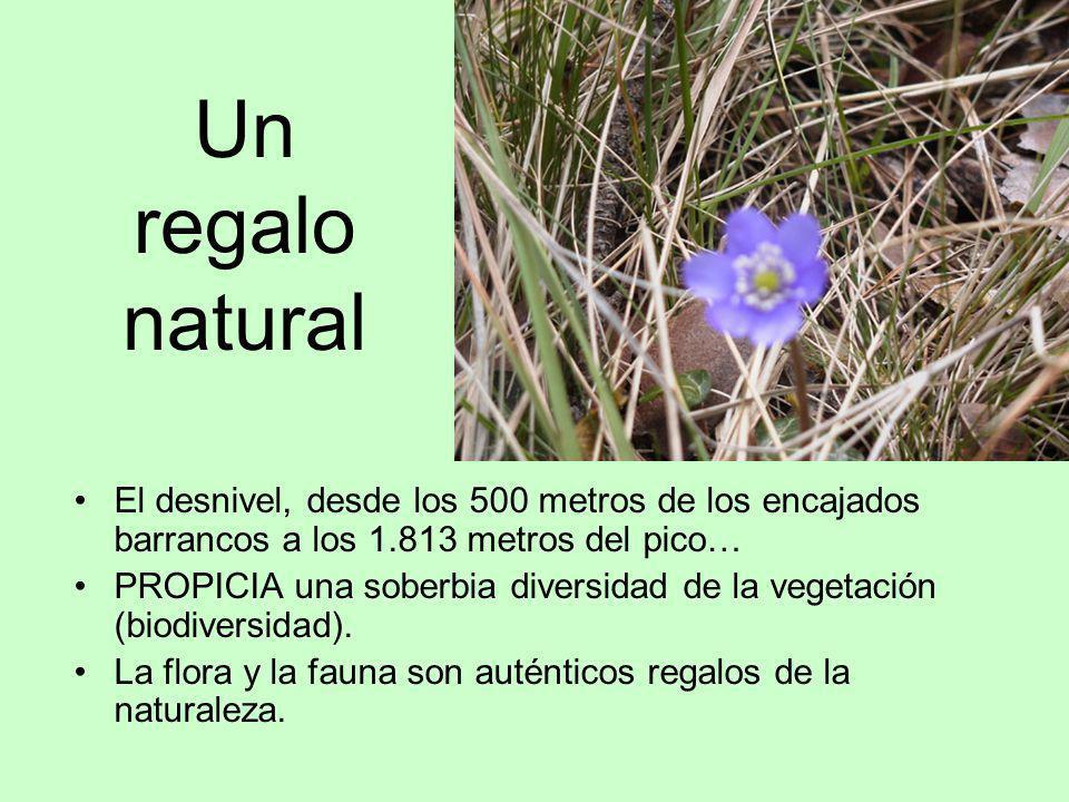 Un regalo natural El desnivel, desde los 500 metros de los encajados barrancos a los 1.813 metros del pico…