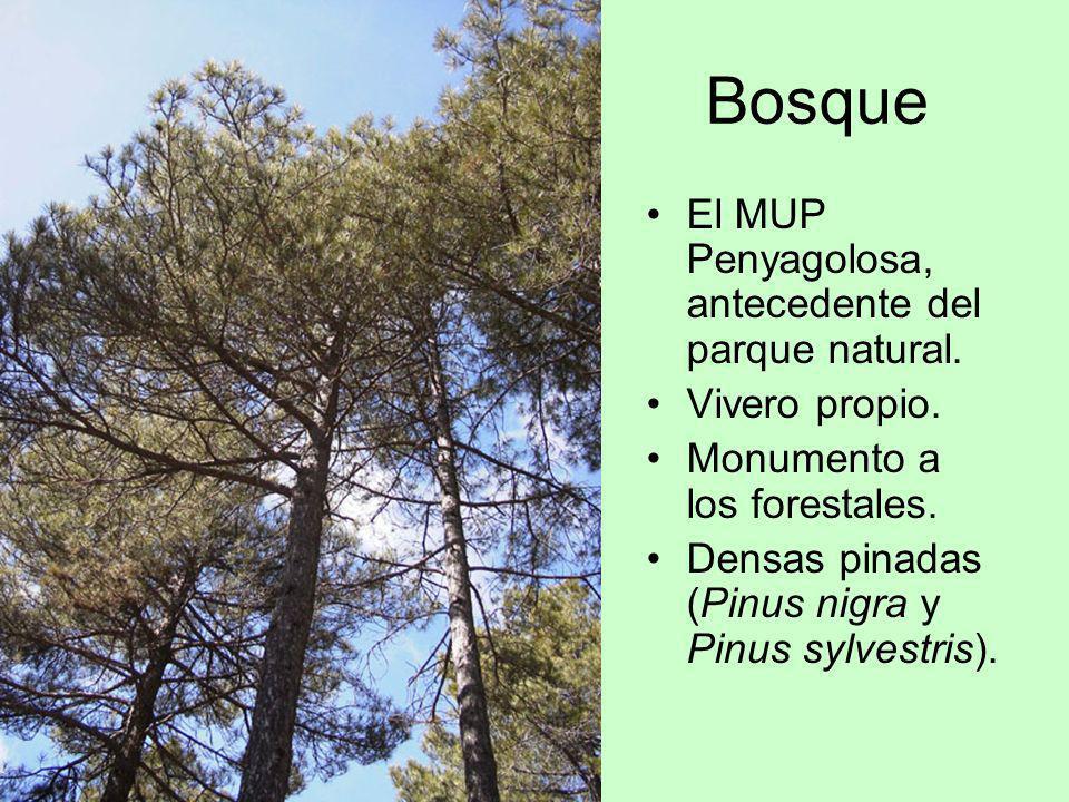 Bosque El MUP Penyagolosa, antecedente del parque natural.
