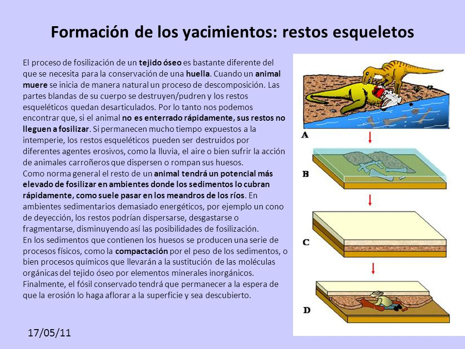 Formación de los yacimientos: restos esqueletos