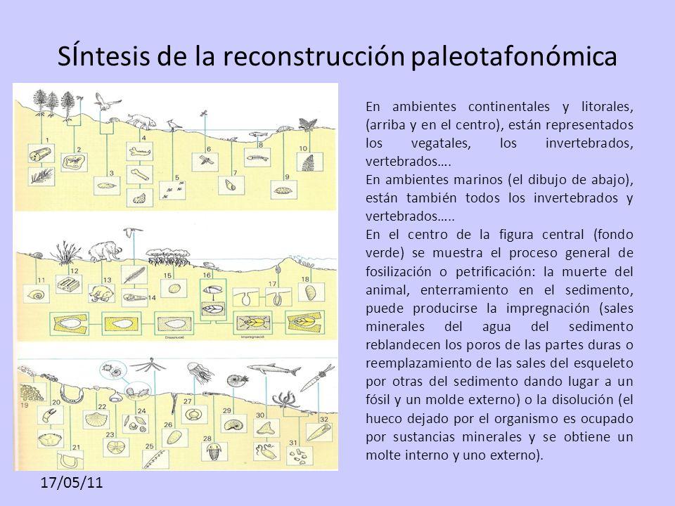 SÍntesis de la reconstrucción paleotafonómica