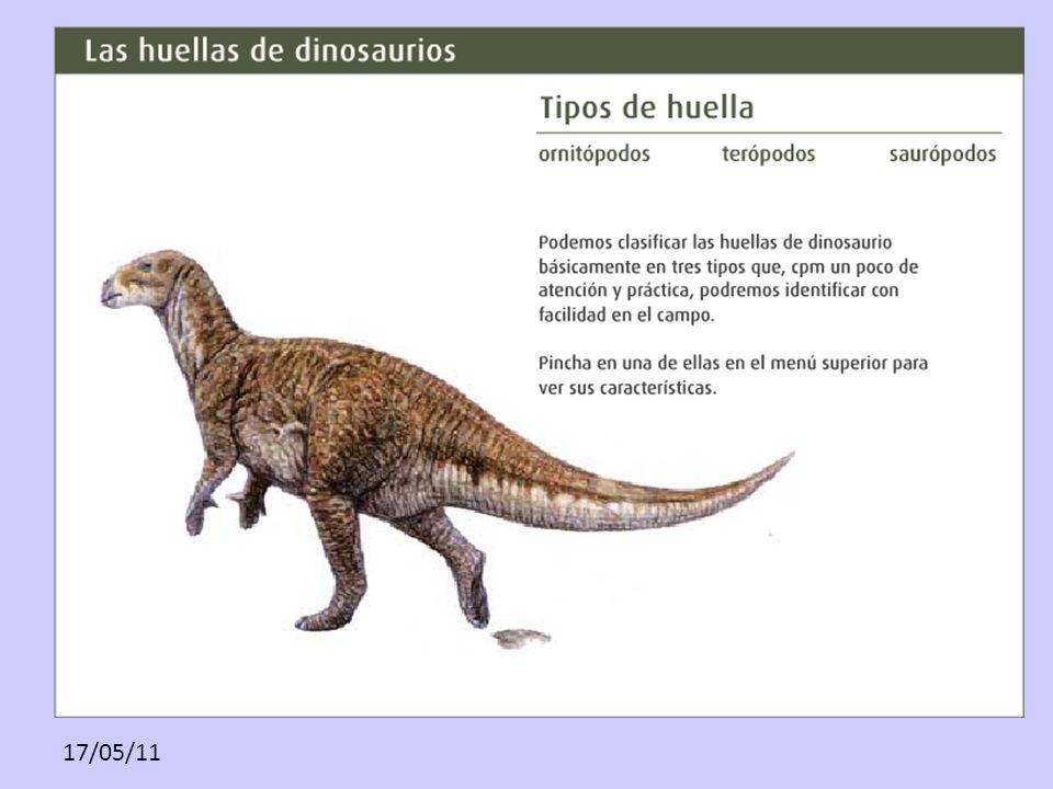 www. lariojaturismo. com/multimedia_contenidos/149_1. tipos_de_huella