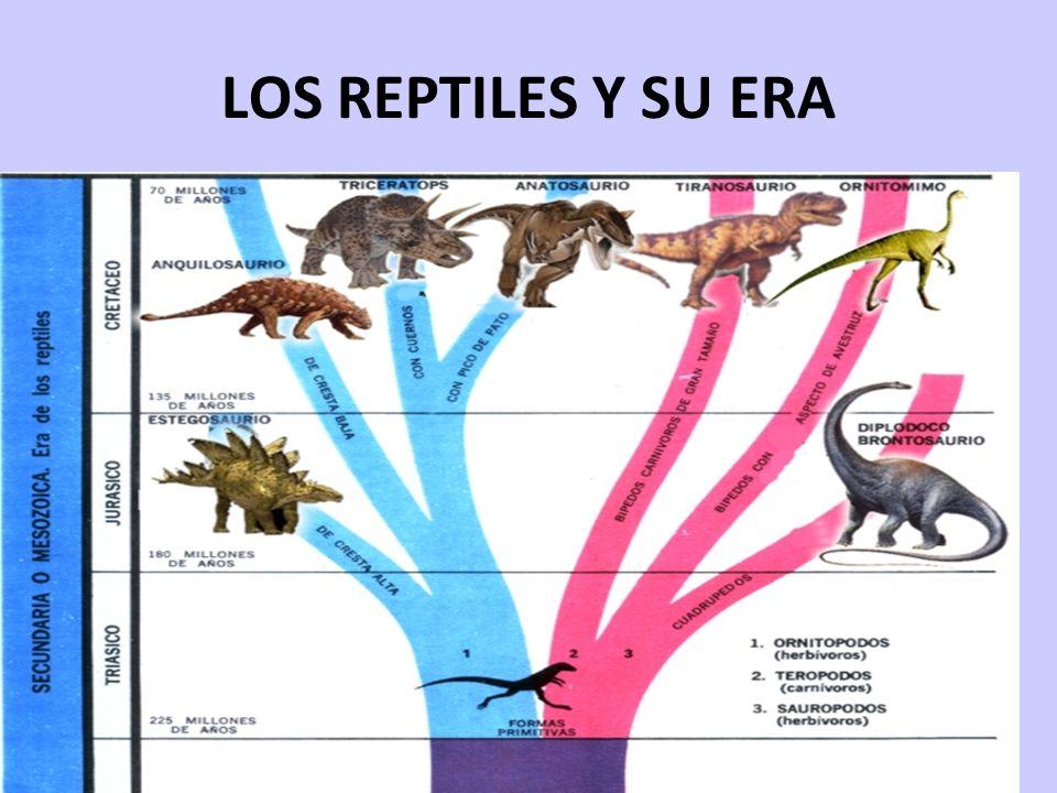 LOS REPTILES Y SU ERA 17/05/11