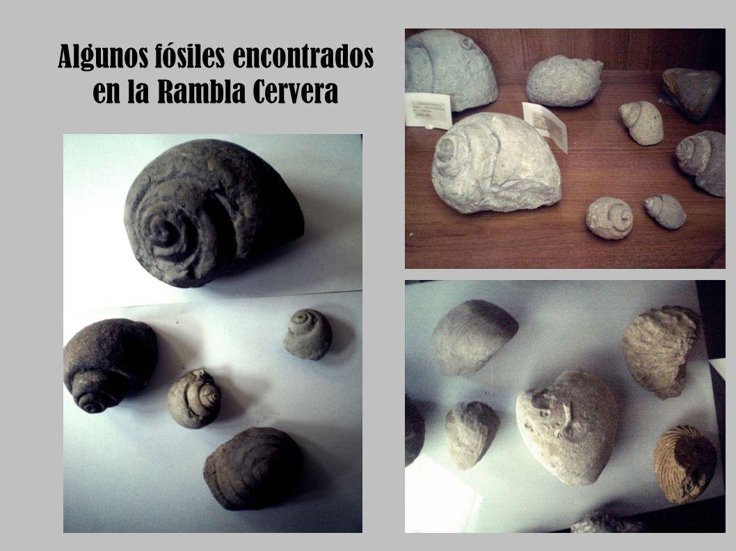 Algunos fósiles encontrados