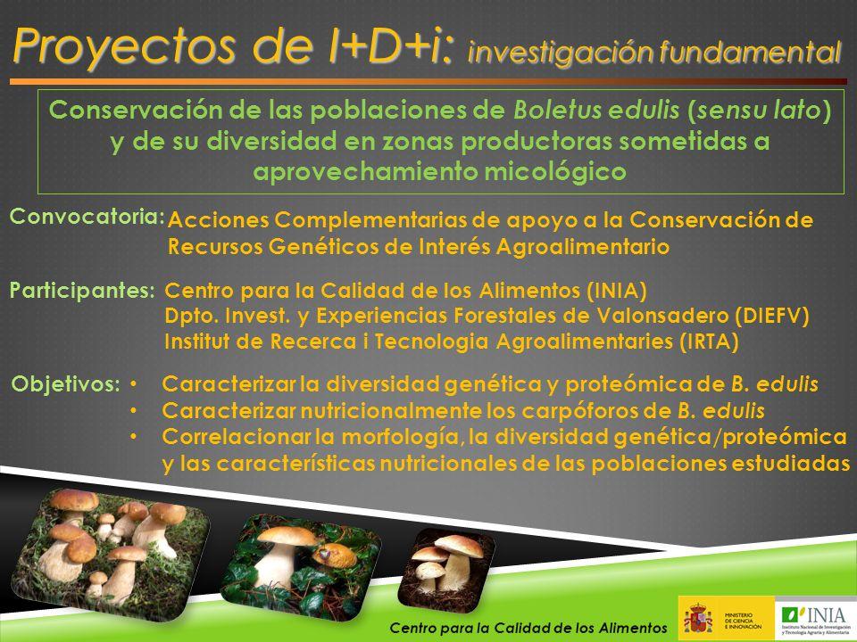 Proyectos de I+D+i: investigación fundamental