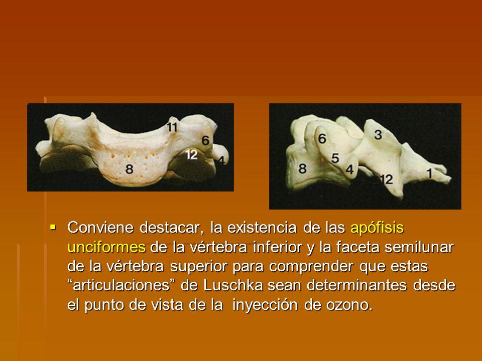 Conviene destacar, la existencia de las apófisis unciformes de la vértebra inferior y la faceta semilunar de la vértebra superior para comprender que estas articulaciones de Luschka sean determinantes desde el punto de vista de la inyección de ozono.