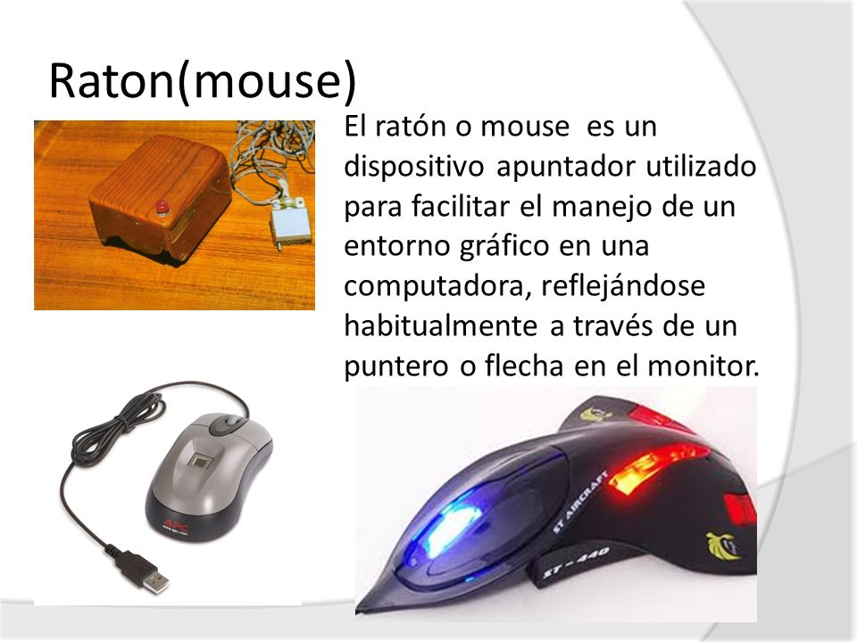 Raton(mouse)