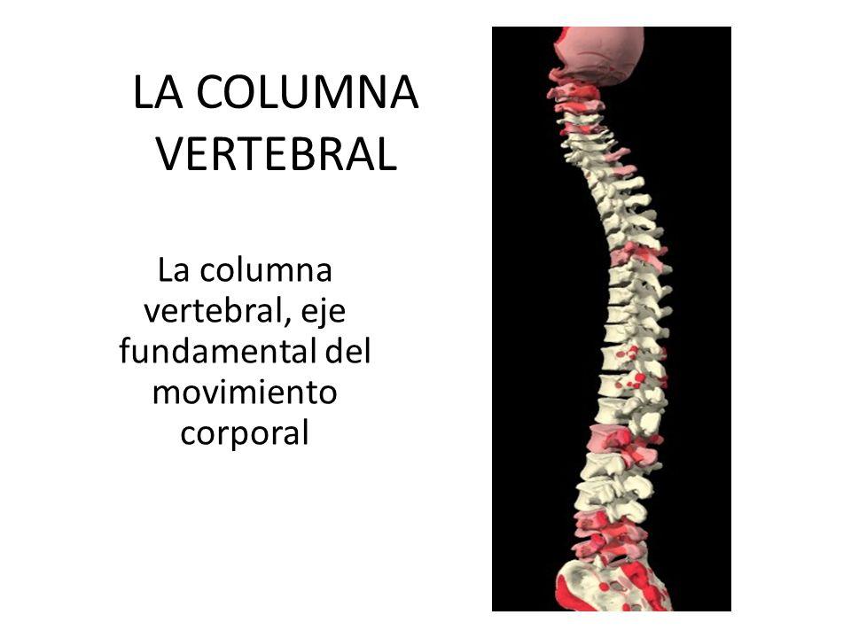 La columna vertebral, eje fundamental del movimiento corporal