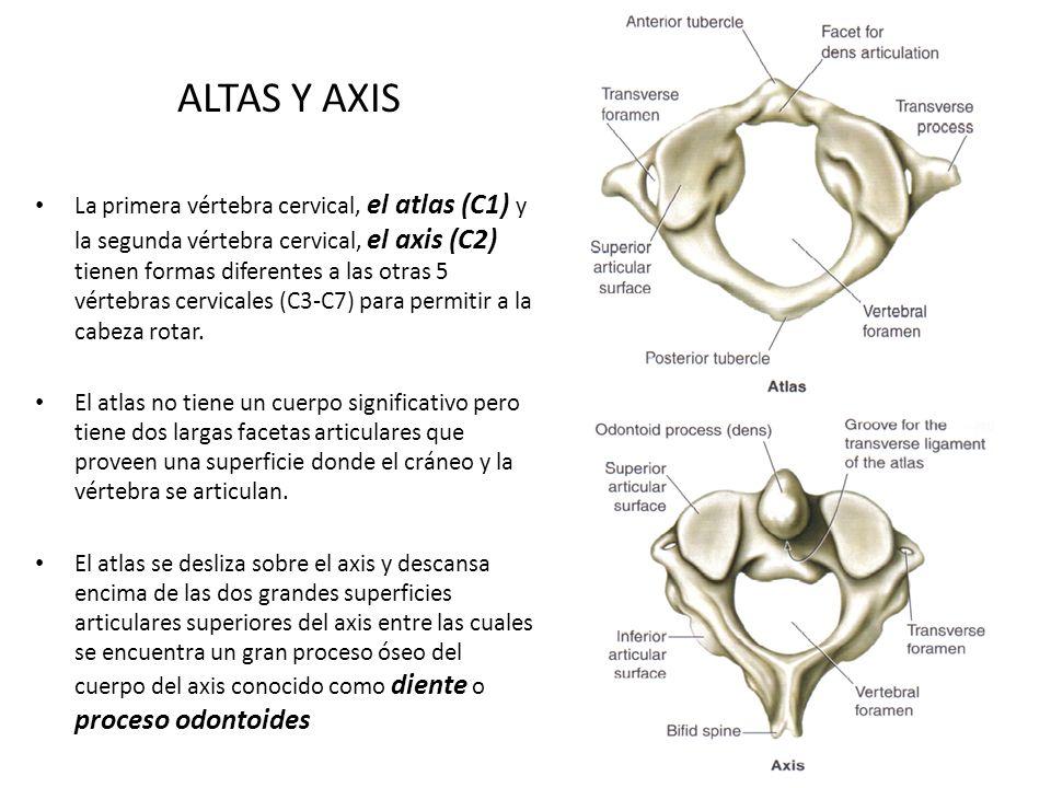 ALTAS Y AXIS