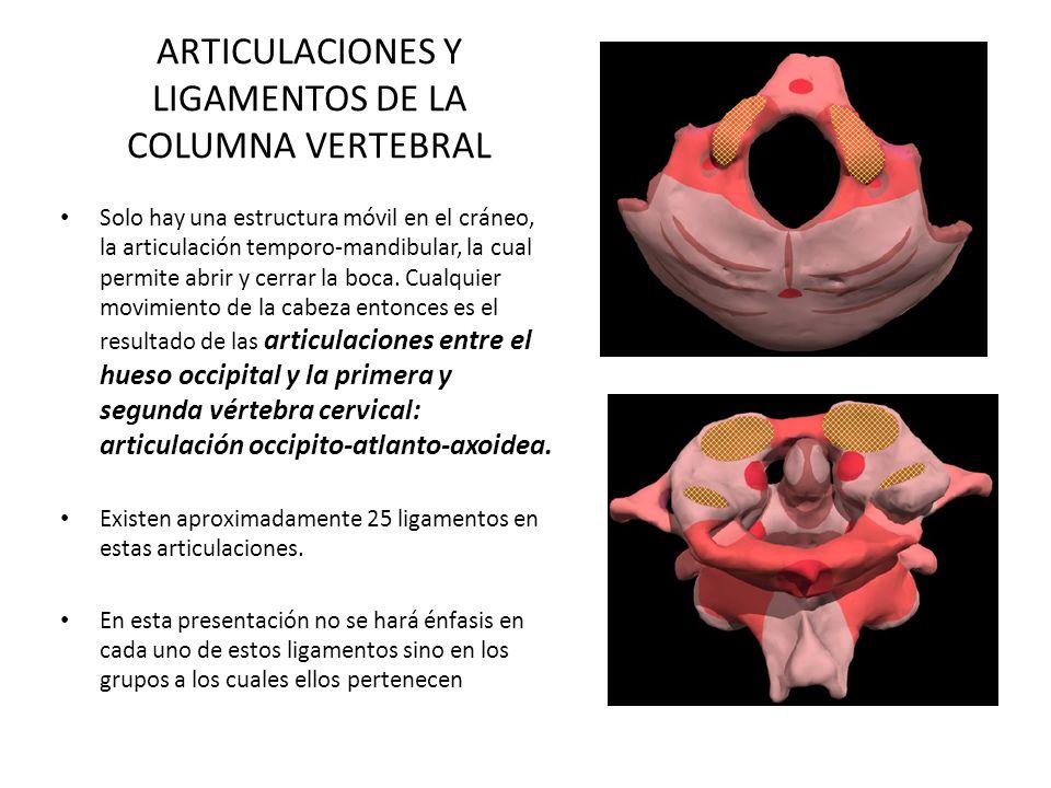 ARTICULACIONES Y LIGAMENTOS DE LA COLUMNA VERTEBRAL