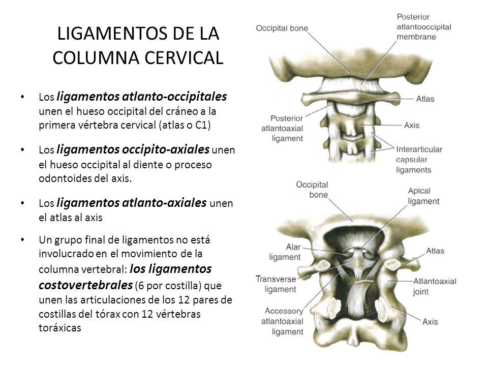 LIGAMENTOS DE LA COLUMNA CERVICAL