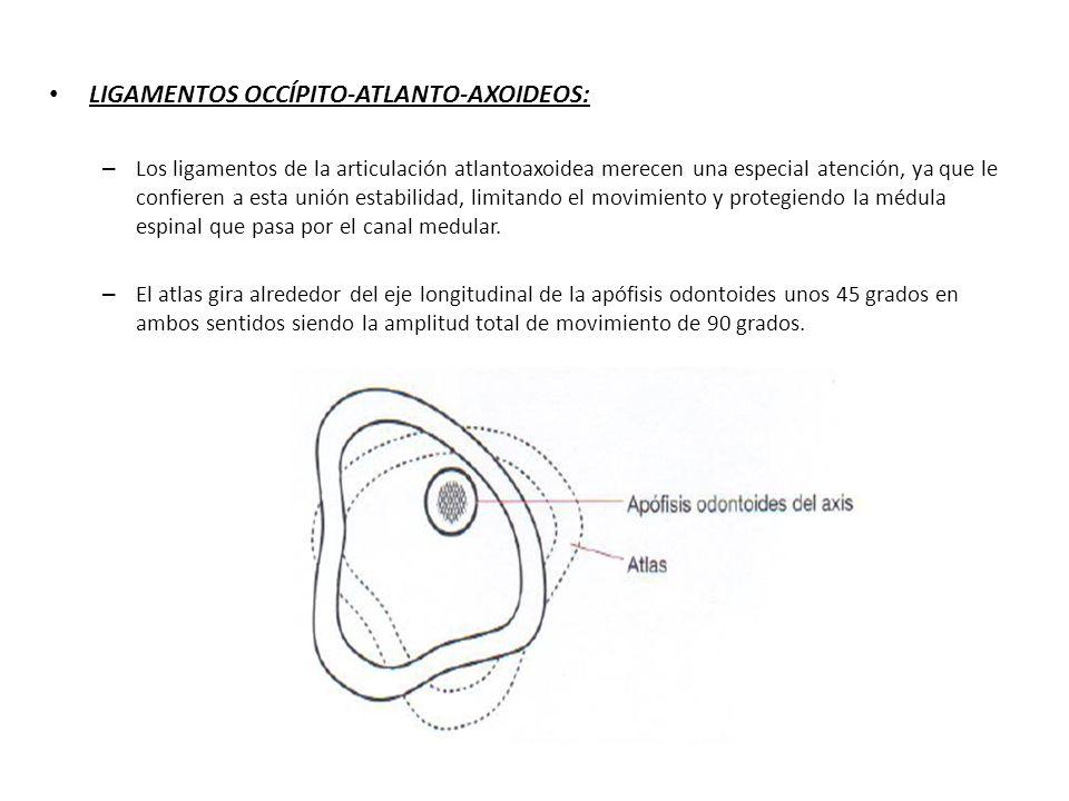 LIGAMENTOS OCCÍPITO-ATLANTO-AXOIDEOS: