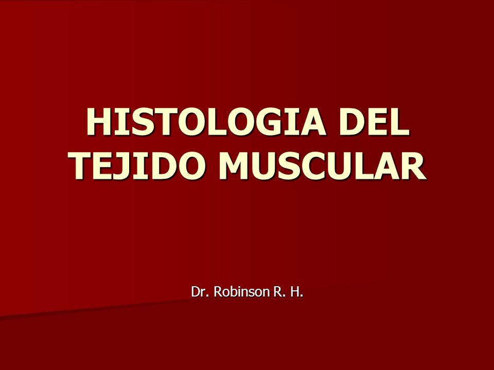HISTOLOGIA DEL TEJIDO MUSCULAR - ppt video online descargar