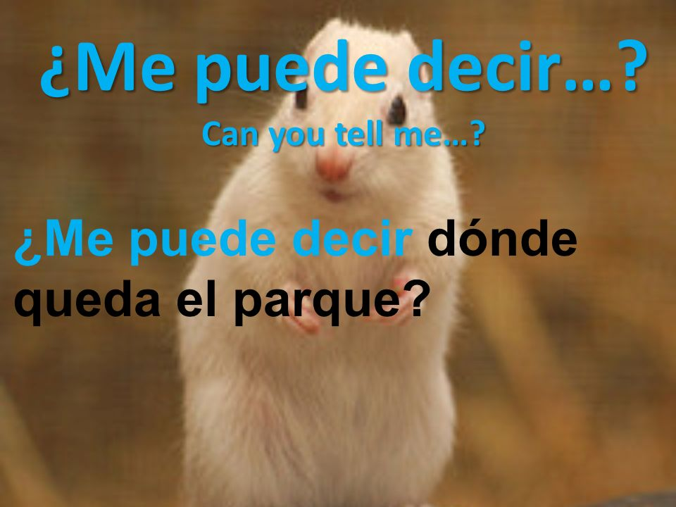 ¿Me puede decir… Can you tell me…