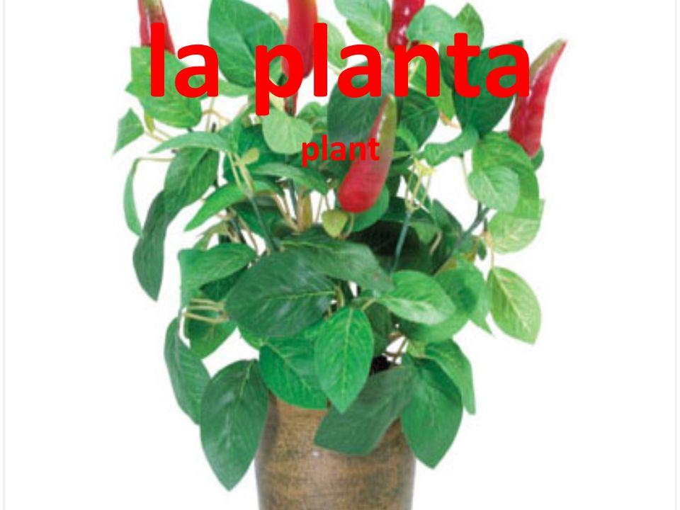 la planta plant