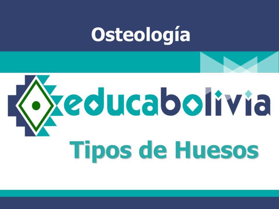 Osteología Tipos de Huesos