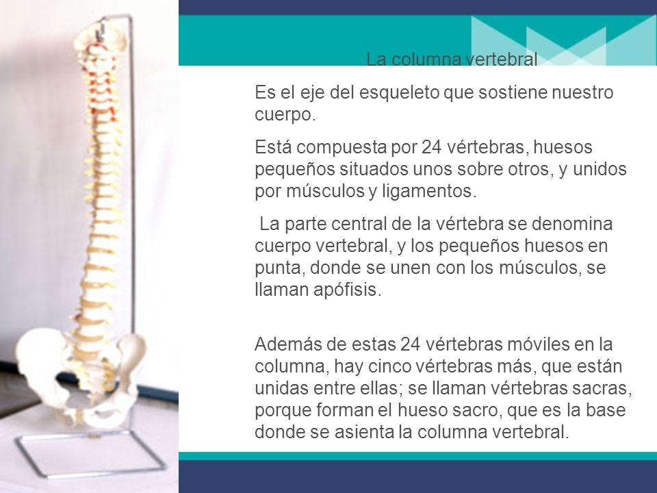 La columna vertebral Es el eje del esqueleto que sostiene nuestro cuerpo.
