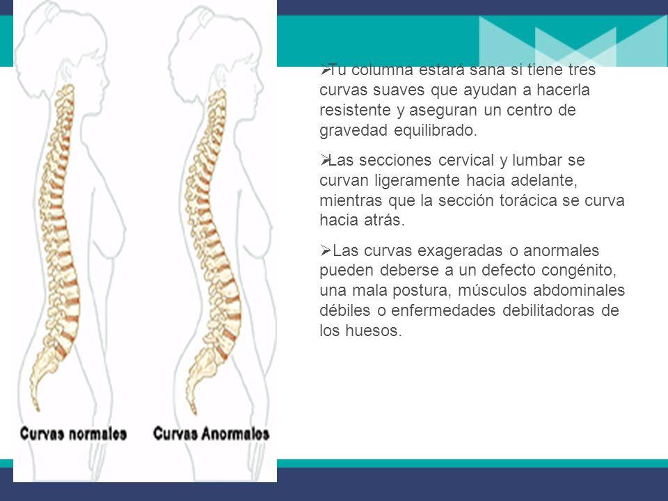Tu columna estará sana si tiene tres curvas suaves que ayudan a hacerla resistente y aseguran un centro de gravedad equilibrado.