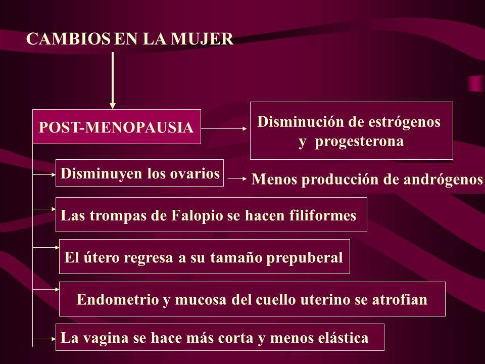 CAMBIOS EN LA MUJER Disminución de estrógenos POST-MENOPAUSIA