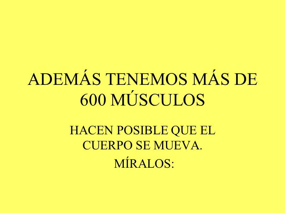 ADEMÁS TENEMOS MÁS DE 600 MÚSCULOS
