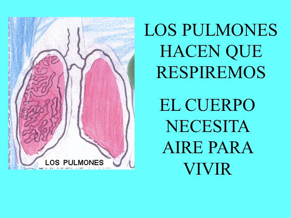 LOS PULMONES HACEN QUE RESPIREMOS
