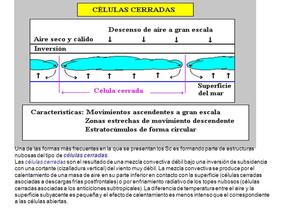 Una de las formas más frecuentes en la que se presentan los Sc es formando parte de estructuras nubosas del tipo de células cerradas.
