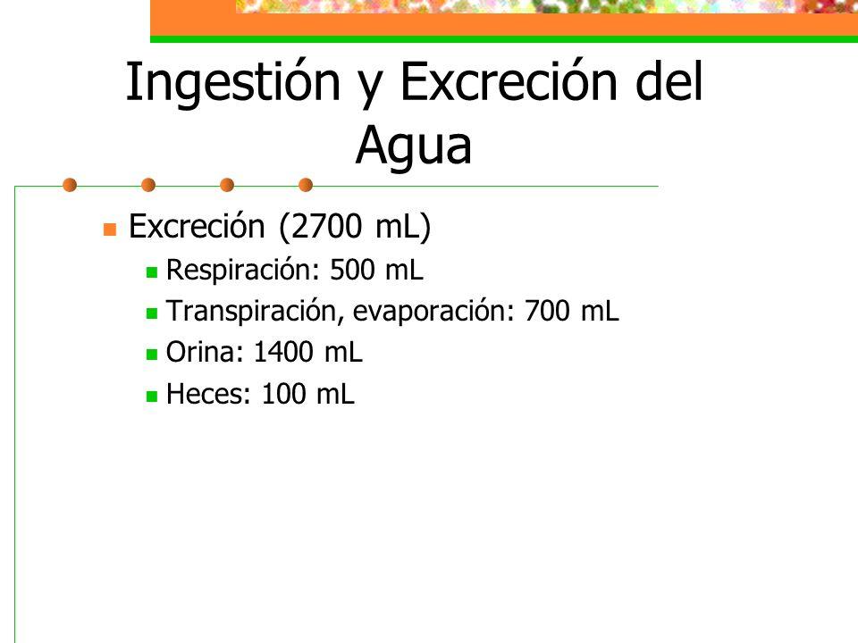 Ingestión y Excreción del Agua