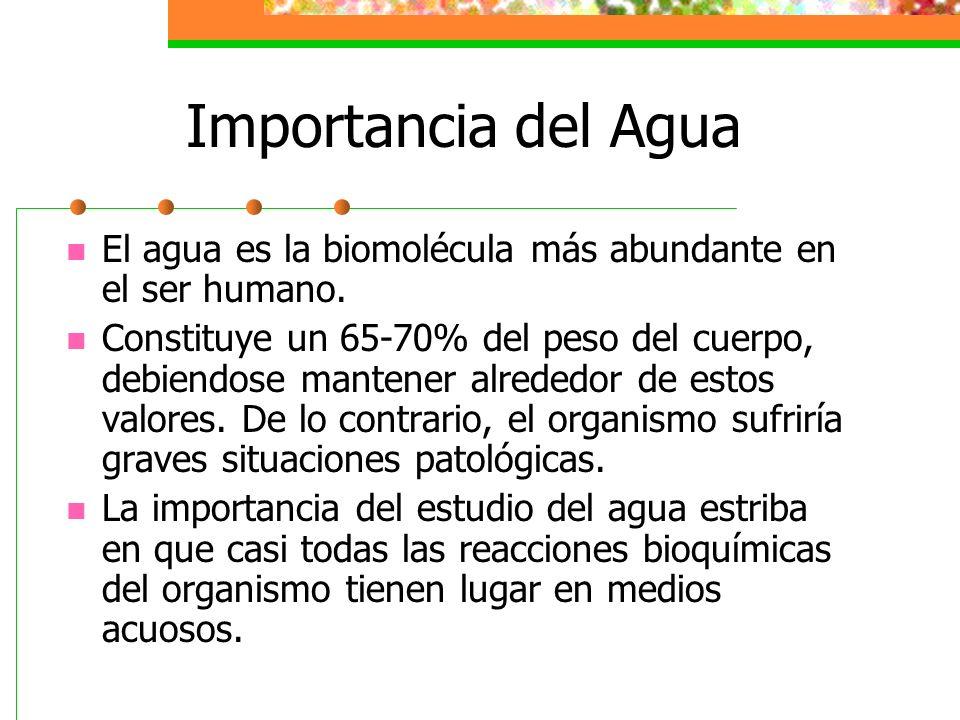 Importancia del Agua El agua es la biomolécula más abundante en el ser humano.