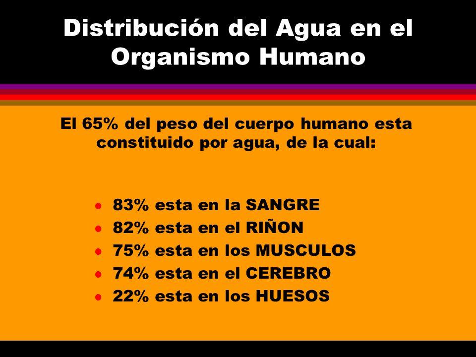 Distribución del Agua en el Organismo Humano