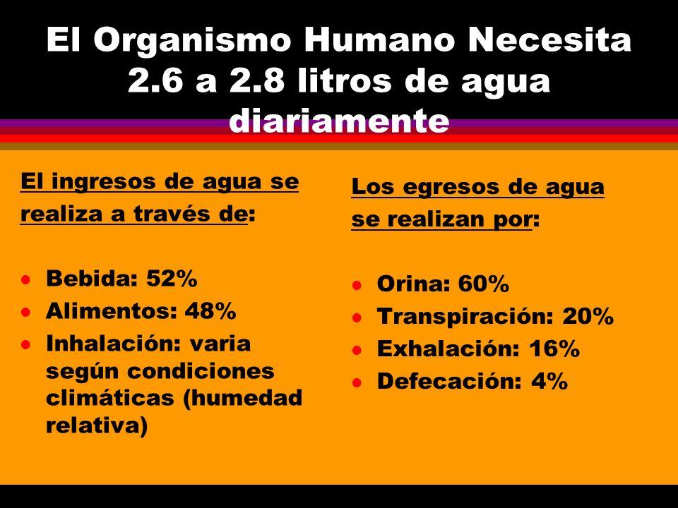 El Organismo Humano Necesita 2.6 a 2.8 litros de agua diariamente