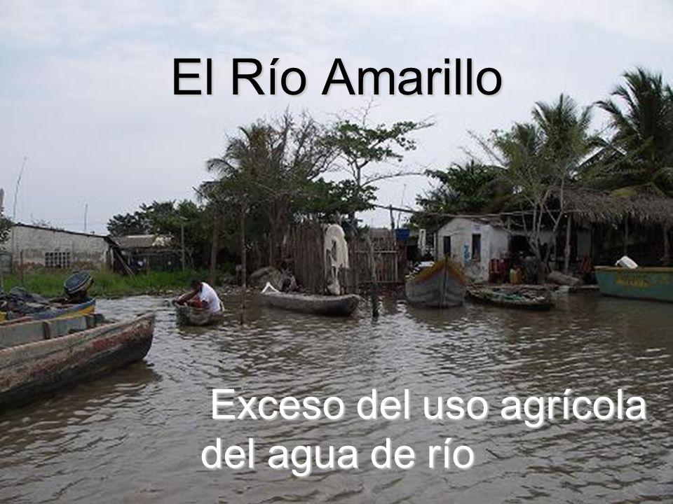 El Río Amarillo Exceso del uso agrícola del agua de río