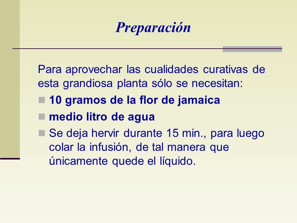 Preparación Para aprovechar las cualidades curativas de esta grandiosa planta sólo se necesitan: 10 gramos de la flor de jamaica.