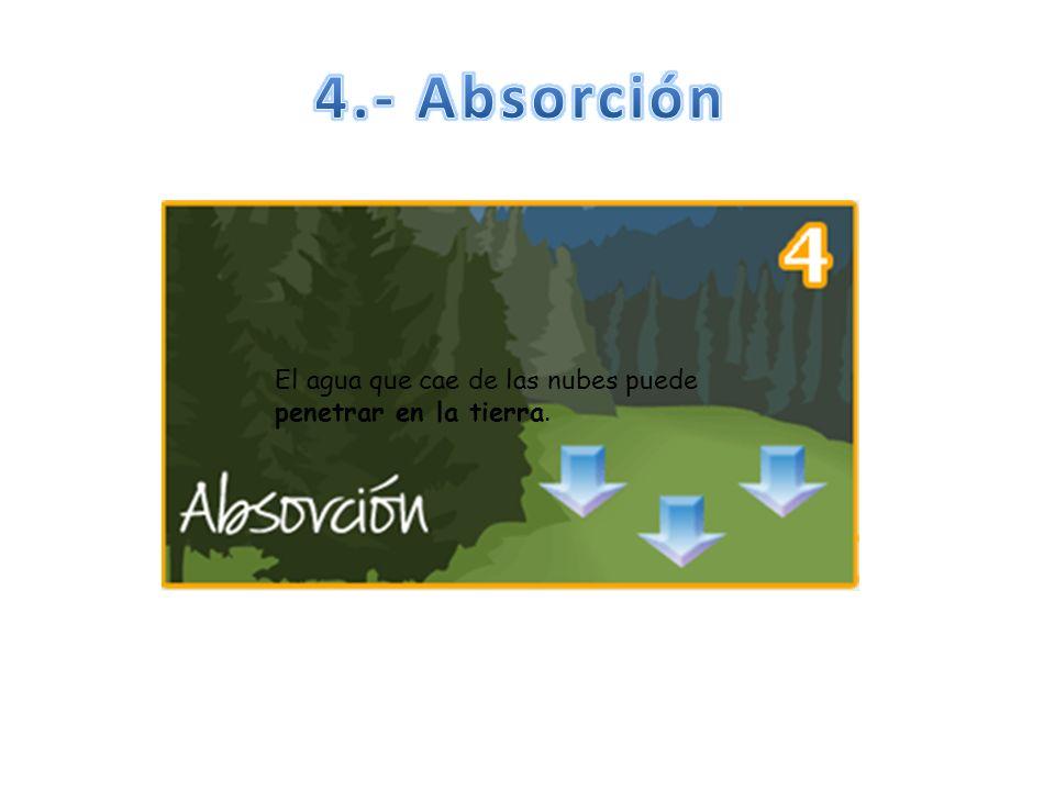 4.- Absorción El agua que cae de las nubes puede penetrar en la tierra.