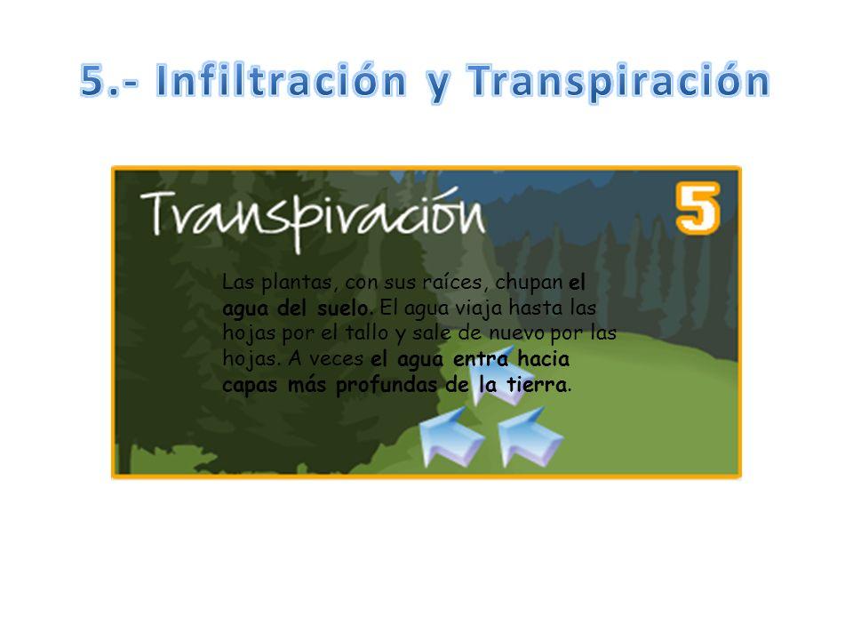 5.- Infiltración y Transpiración