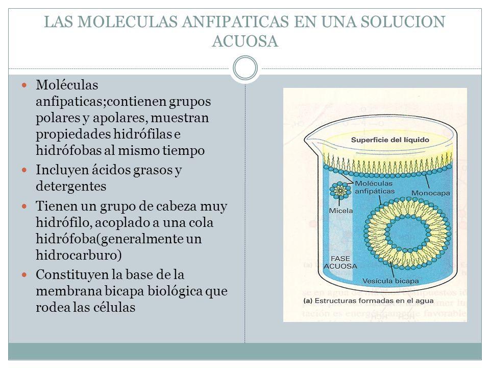 LAS MOLECULAS ANFIPATICAS EN UNA SOLUCION ACUOSA